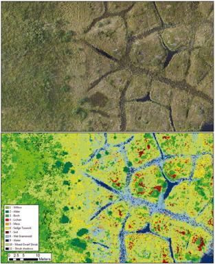 Classification of tundra vegetation types from Fraser et al. 2016